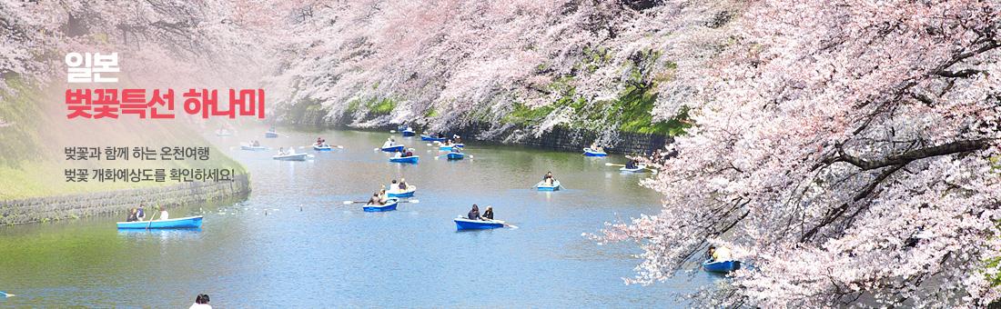일본 벚꽃특선 하나미