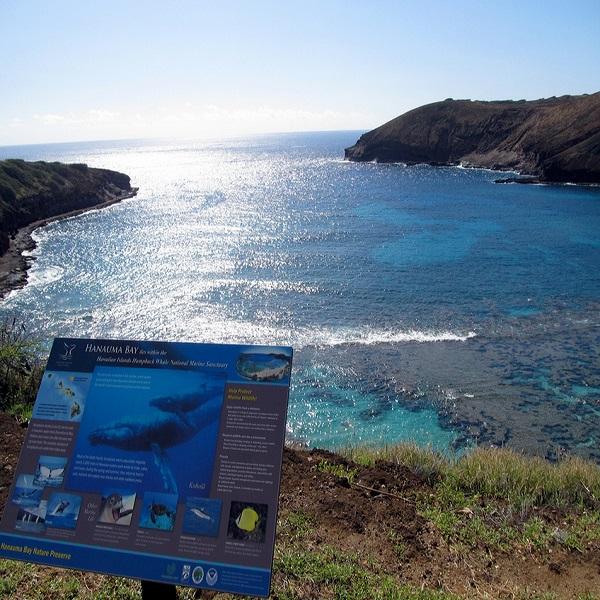 [하와이 현지투어] D.하나우마베이 이미지