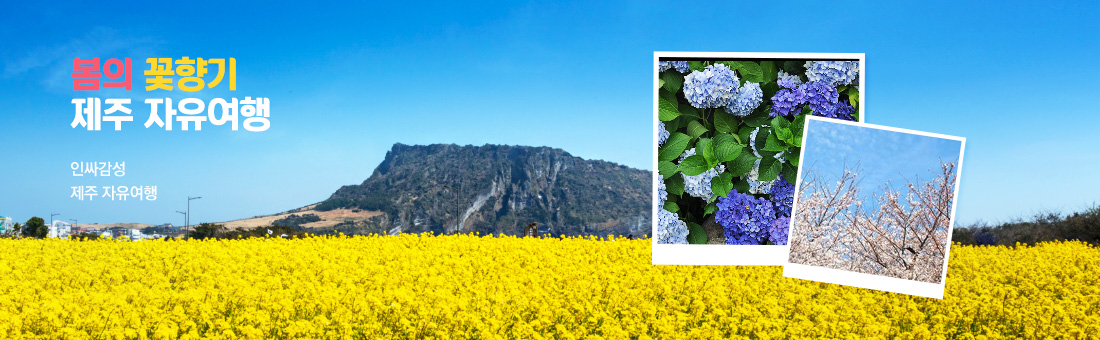 봄의 꽃향기 제주 자유여행