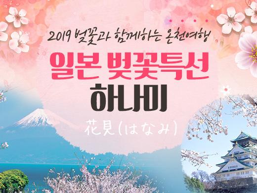 2019일본벚꽃