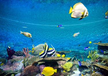 부산국립해양박물관 이미지