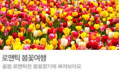 국내 봄꽃여행